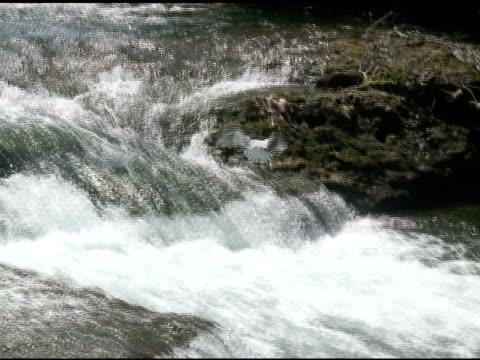 vídeos de stock, filmes e b-roll de gull 3-ntsc com som - rio niagara