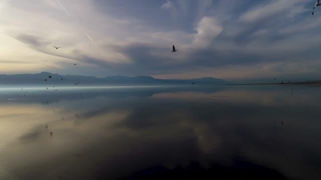 gull flight over the salton sea - spektakularny krajobraz filmów i materiałów b-roll