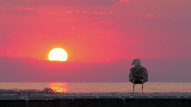 Gull flying away Sea scene at sunset