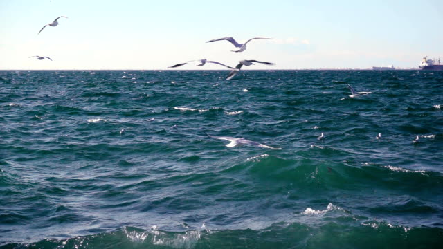Gulls hovering over the stormy sea slow mo video