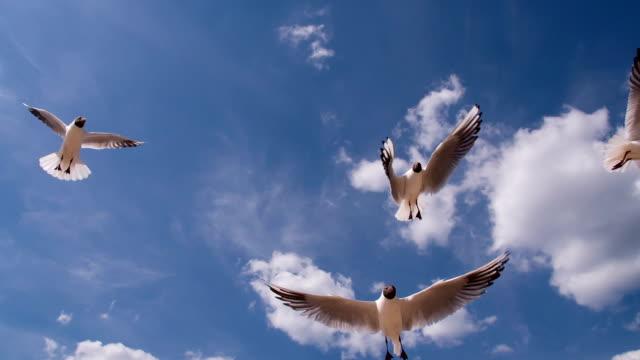 맑은 푸른 하늘에 갈매기 - 하늘을 나는 새 스톡 비디오 및 b-롤 화면