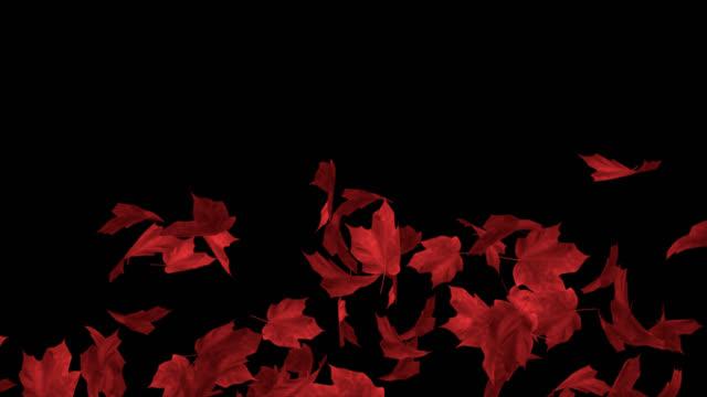 gitter und ausbrüche von herabfallenden roten blättern (alphakanal) - laub winter stock-videos und b-roll-filmmaterial