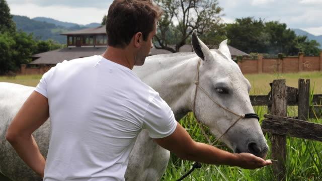stockvideo's en b-roll-footage met guy voeding paard - alleen één mid volwassen man