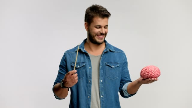 Guy pointing at a brain model with a wooden stick Guy pointing at a brain model with a wooden stick isolated on white background cerebellum stock videos & royalty-free footage