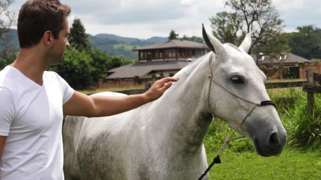 stockvideo's en b-roll-footage met guy strijkende paard - alleen één mid volwassen man