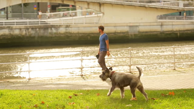 Guy walking along waterfront with his dog running around lawn, bridge over river video