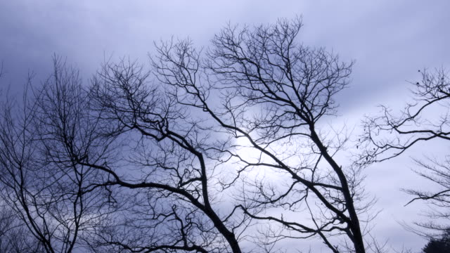 Gyeongju, Korea, Clouds moving over the branches in danseoksan video