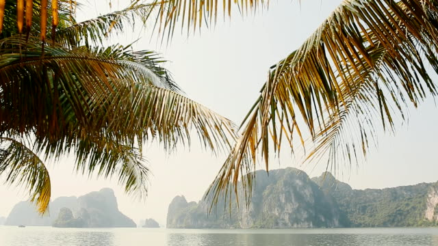 ha long city promenade with palm trees. rocks and mountains. vietnam - lunghezza video stock e b–roll