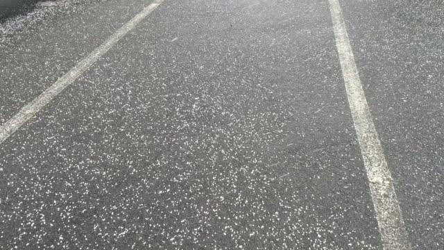 hail falls on street ground - grandine video stock e b–roll