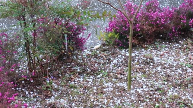 hailstones falling on backyard flowers - grandine video stock e b–roll