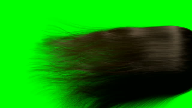 hair render animation BROWN GS A close up of a long length of brown hair blowing and swaying in slow motion before settling on a green screen background human hair stock videos & royalty-free footage