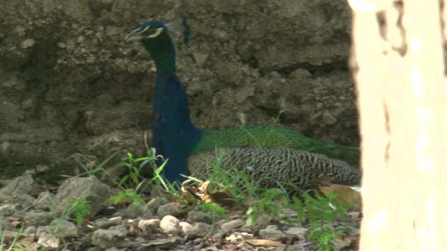 Haiti earthquake - Peacock video