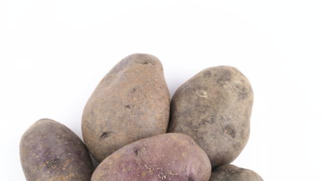 halbbild violetten kartoffeln. langsam rotierende auf der drehscheibe auf dem weißen hintergrund isoliert. hautnah. makro. kopieren sie raum. - knollig stock-videos und b-roll-filmmaterial