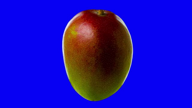 Half ripe mango rotates blue screen for chroma key Mango with a red part and a green rotate on a blue background for chroma key mango stock videos & royalty-free footage