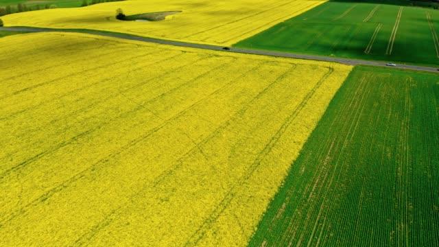 半黄色と緑のフィールド、空中写真、ポーランド - 顕花植物点の映像素材/bロール
