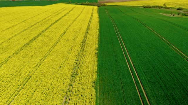 half yellow and green field in spring, poland, aerial view - капустные стоковые видео и кадры b-roll
