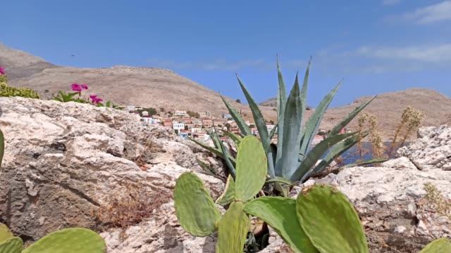 halki ( chalki ) island in the aegean sea, pan shot cactus plants against city built on rustic mountain - isole egee video stock e b–roll