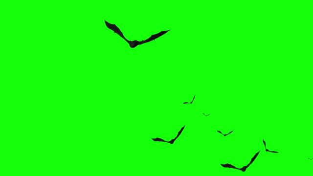 Halloween Bats Flying on Green Screen
