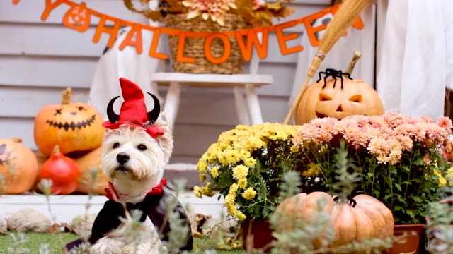 Halloween dog. Trick or treat holiday concept