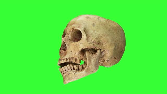 cadılar bayramı, yeşil ekran arka plan üzerinde izole talking kafatası - i̇nsan i̇skeleti stok videoları ve detay görüntü çekimi