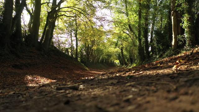 tunnel halnaker di alberi in autunno - sussex occidentale video stock e b–roll