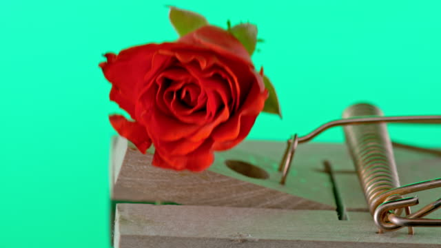SLO MO LD Hammer of a mouse trap striking the red rose