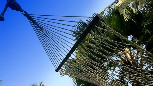 Hammock under palm trees video