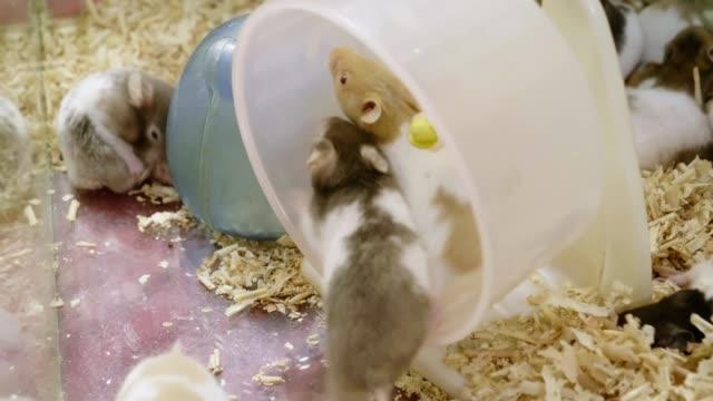 Hamster running on board in box