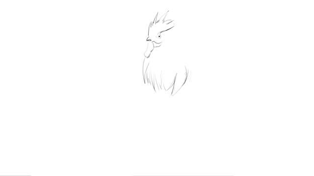 hand ritning av en rooster-art process - animal doodle bildbanksvideor och videomaterial från bakom kulisserna