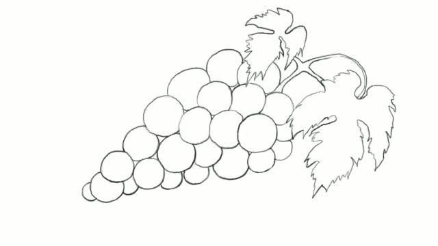 赤ブドウのビデオ クリップの手図面 - ぶどう イラスト点の映像素材/bロール