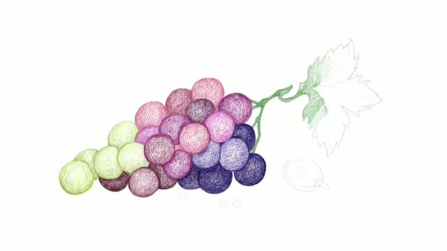 種子ビデオクリップと赤ブドウの手描画 - ぶどう イラスト点の映像素材/bロール