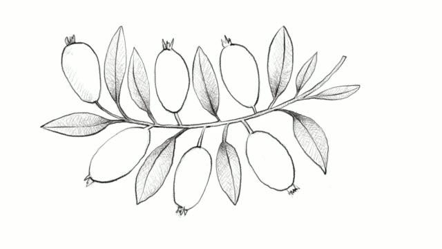Hand Drawn of Arrayan Fruits Video Clip video