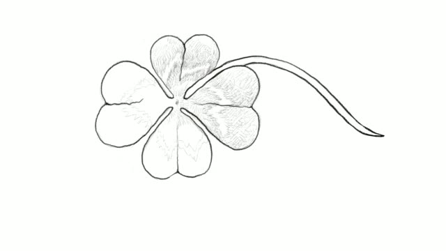 Hand Drawn of Four Leaf Clovers Video Clip video