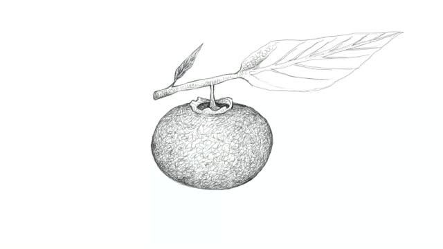 vídeos de stock e filmes b-roll de hand drawn of gold apple fruits video clip - diospiro