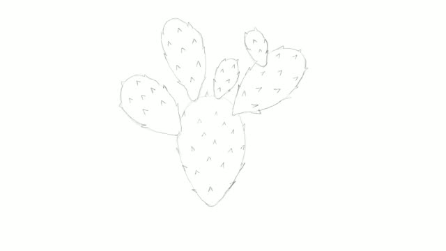 Hand Drawn of Nopal Cactus Video Clip video