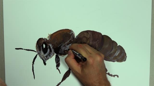 en hand ritar en bee insekt på en vit tavla med en penna - djurarm bildbanksvideor och videomaterial från bakom kulisserna