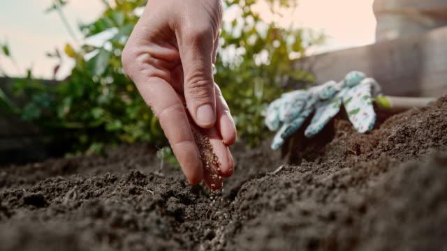 vidéos et rushes de cu super slow motion main laissant tomber des graines de plantes dans le sol du jardin - potager