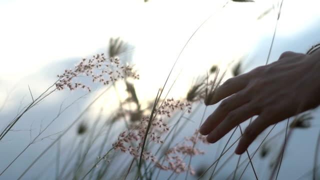 Femelle de main toucher prairie d'herbe dans le mouvement lent de la matinée - Vidéo
