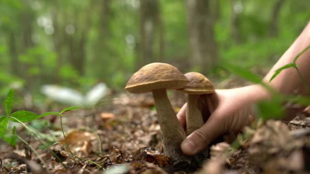 cu-hand, die ernte der pilze im wald - pflücken stock-videos und b-roll-filmmaterial