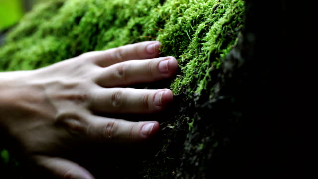 hand of a young woman stroking a green moss video