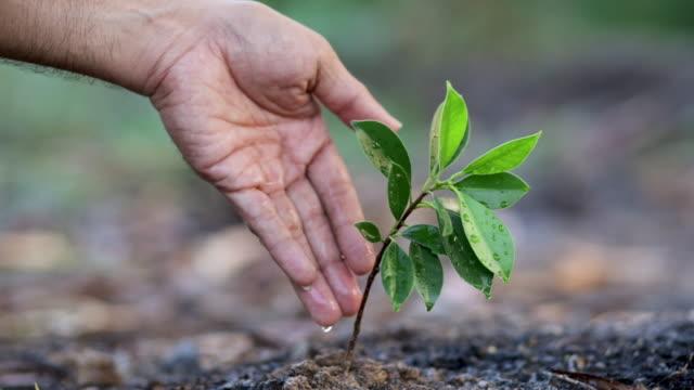 hand der landwirtschaft bewässerung zu grünen pflanze auf boden mit naturhintergrund - wassersparen stock-videos und b-roll-filmmaterial