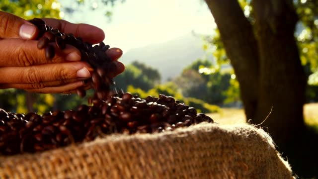 hand heben und landwirt überprüfen seine kaffee bohnen - geröstete kaffeebohne stock-videos und b-roll-filmmaterial