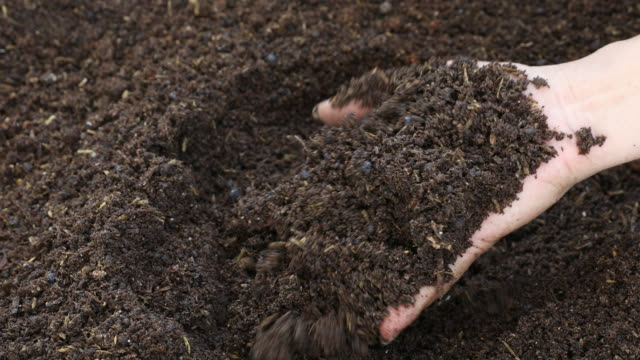 Hand of farmer showing fertile of black soil for cultivation.Agriculture concept Hand of farmer showing fertile of black soil for cultivation.Agriculture concept agricultural occupation stock videos & royalty-free footage