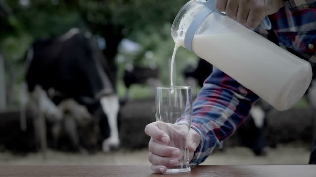 hand of male are pouring milk into a glass in farm dairy, cow on background, video slow motion - большой кувшин стоковые видео и кадры b-roll