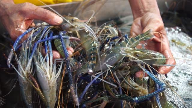 hand of man choosing shrimp in fresh seafood market. - тайландская кухня стоковые видео и кадры b-roll