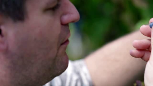 hd: hand picking a berry from ripe grapes - vit rieslingdruva bildbanksvideor och videomaterial från bakom kulisserna