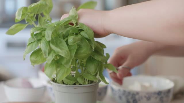 hand plocka färska basilikablad i köket - basilika ört bildbanksvideor och videomaterial från bakom kulisserna