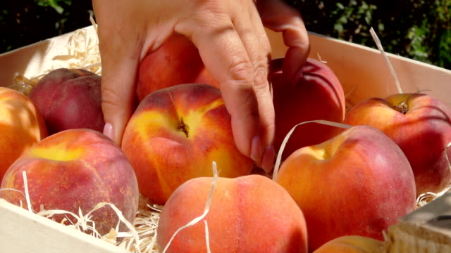 Hand puts ripe juicy peach in a wooden box Female hand puts ripe juicy peach in a wooden box peach stock videos & royalty-free footage