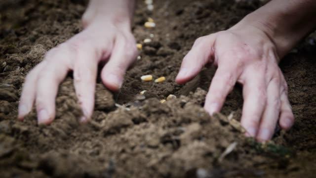 vídeos de stock, filmes e b-roll de semeador de milho manual, cobrindo o solo em sementes - semente