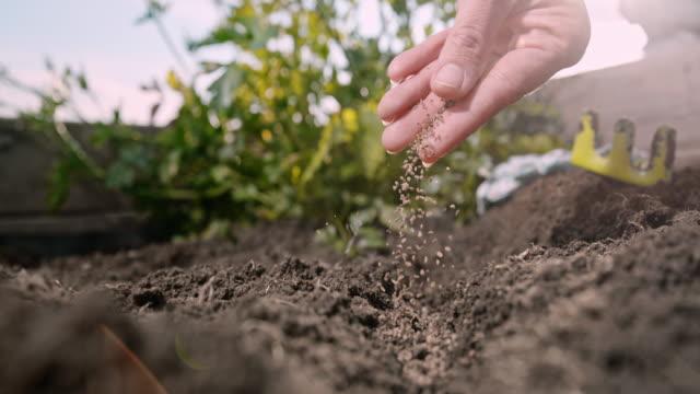 vídeos de stock, filmes e b-roll de super slow motion hand asrinkling sementes de plantas em solo de jardim - semente